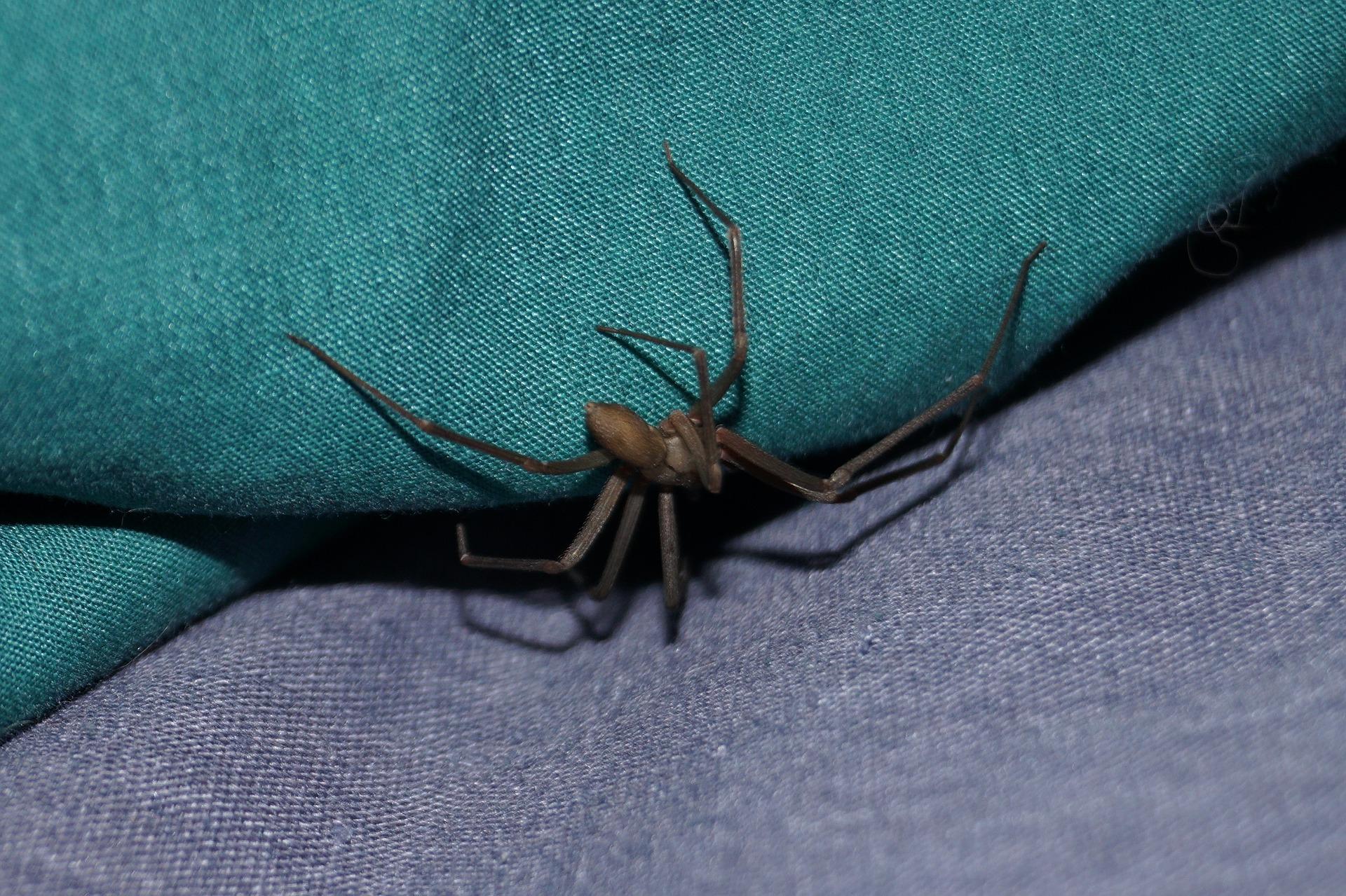 10 spider-1448506_1920